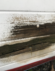 Stern rot on planking above waterline